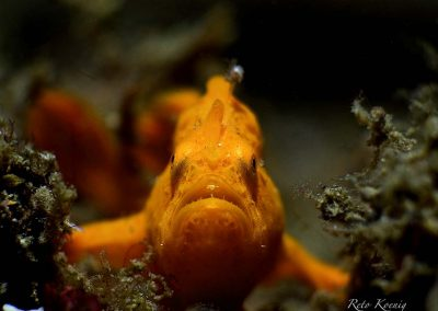Diving Lembeh - The critters paradise